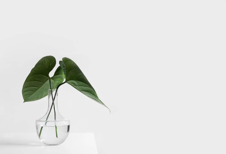 feuille dans vase